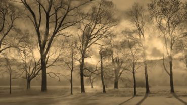 Foggy Fantasy Landscape