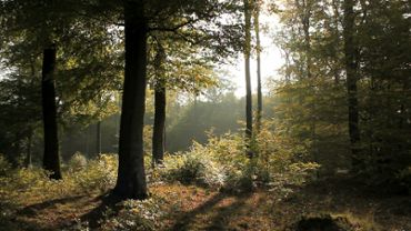 Late Summer Forest