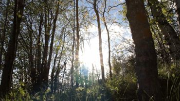 Sunny forest slider shot