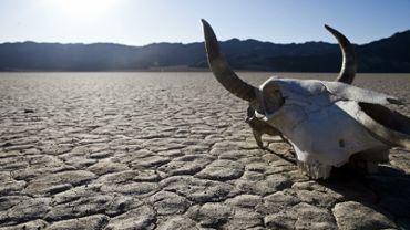 Death Valley Skull
