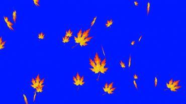 Autumn foliage blue screen