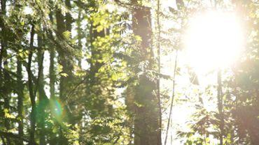 Slow forest slider