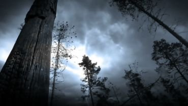 Lightning storm and trees