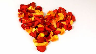 Heart Made of Rose Petals