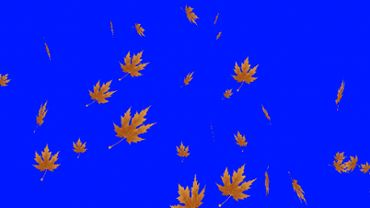 Autumn foliage blue screen