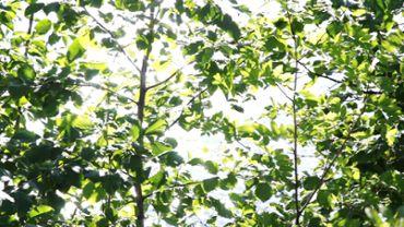 Glittering leaves