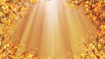 Sunny Autumn Loop