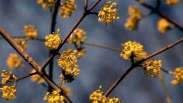 Spring Buds - 04 (HD)