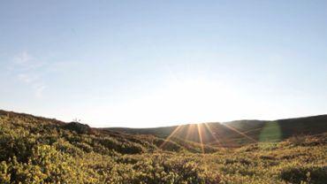 Sunny tundra landscape