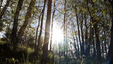 Sunny Forest Slider