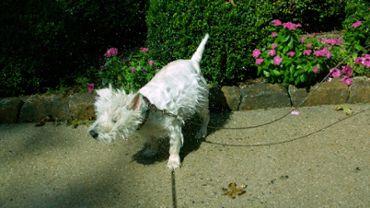 Slow Motion Wet Dog