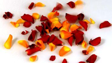 Fallende Rosenblätter