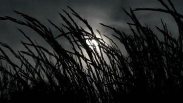 Grass Silhouette