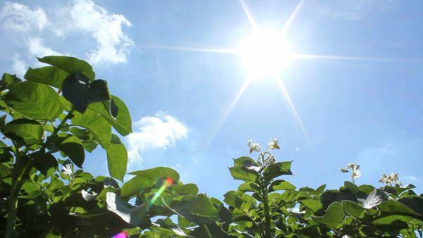 Sunny Crops
