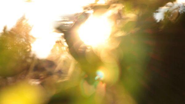 Defocused leaves and sunlight