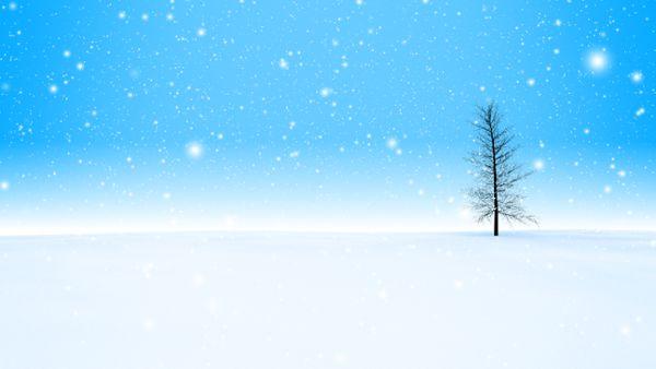 Snow Tree loop