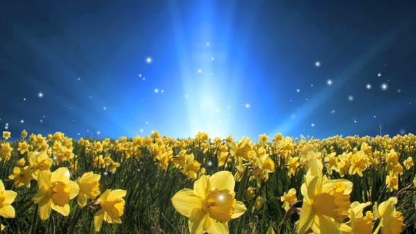 Magic Springtime