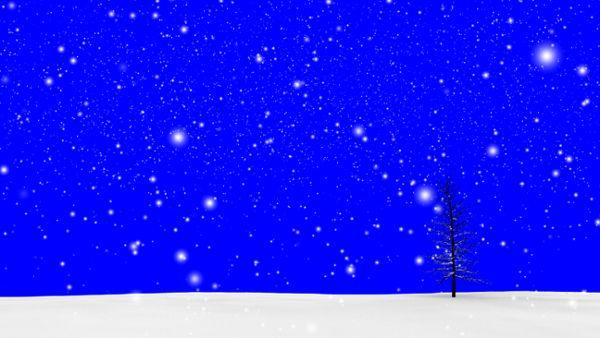 Schnee Bäumchen Bluescreen