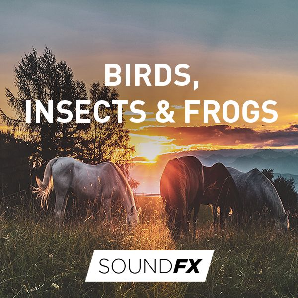 Birds, Insects & Frogs
